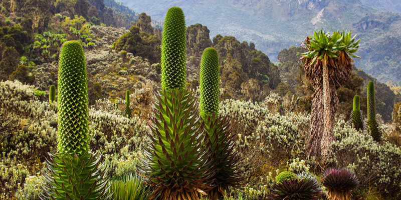 10 Days Mount Rwenzori Trekking