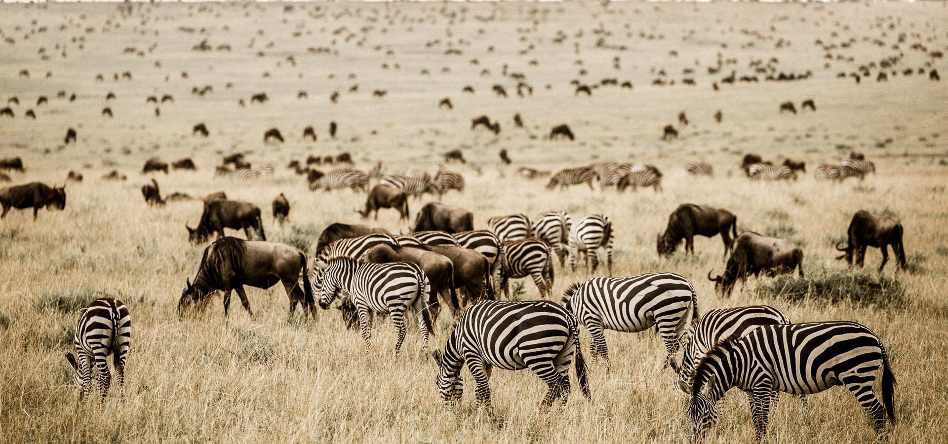 Best Time For Tanzania
