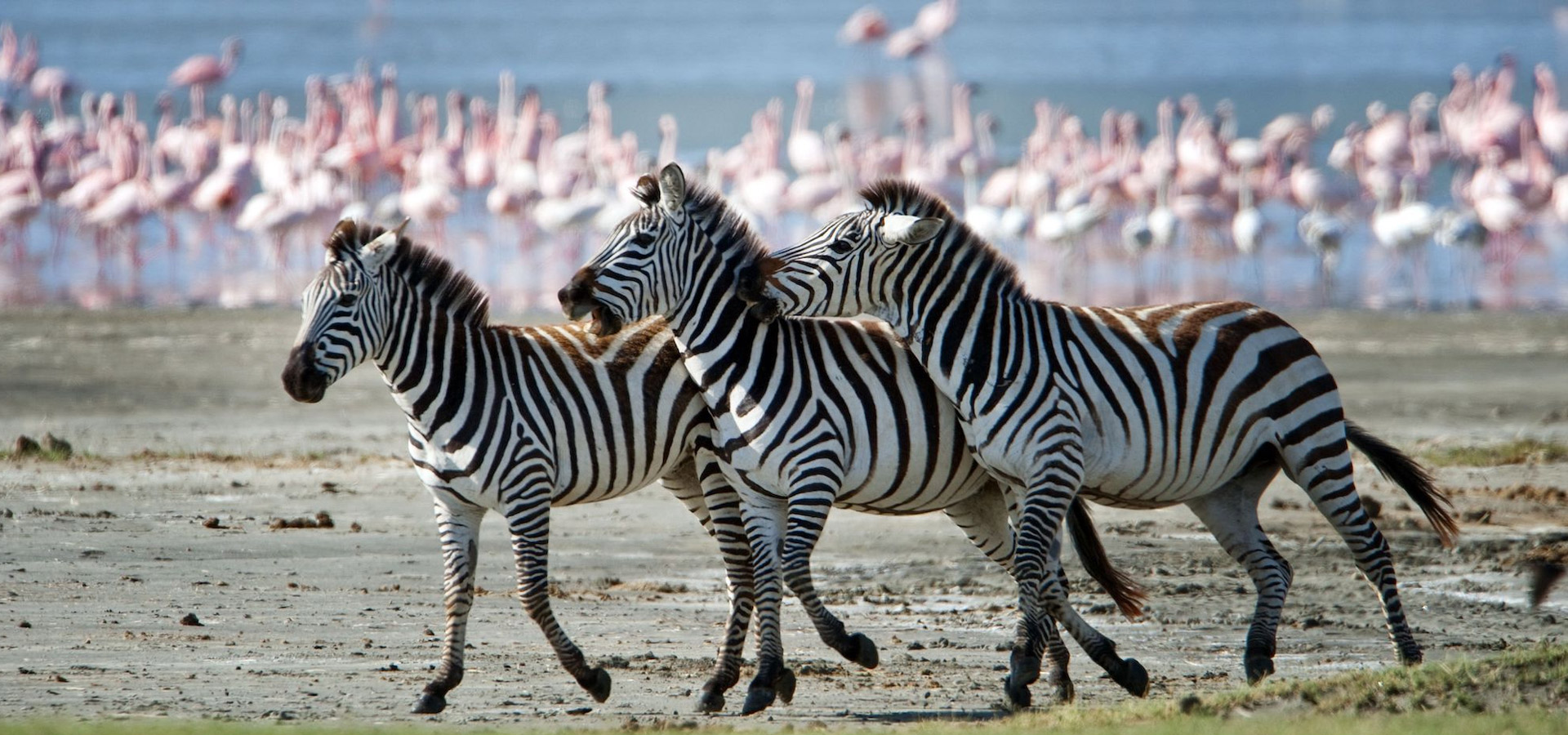 Lake Manyara Day Trip