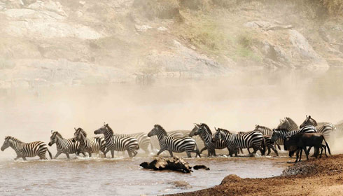Kenya : Is It Time For Tourists To Return?
