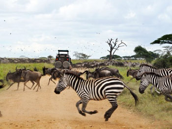 Serengeti Day Trip