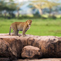 4 Days Tanzania Wildlife Safari