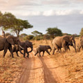 2 Days Tanzania Wildlife Safari